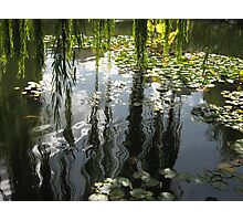 Weeping Willows Photographic Print
