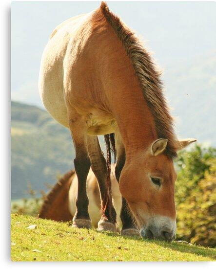 Przewalkis Horse by AnnDixon