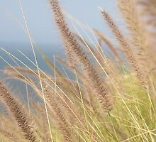 Grasses of North Queensland by Sue  Fuller