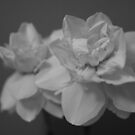 Tissue Paper Flowers by Tracy Duckett