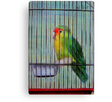Bird in a Cage Canvas Print