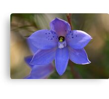 Dotted sun orchid .. Thelymitra ixioides Canvas Print