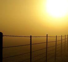Foggy Morning Sunrise by Samantha Dean