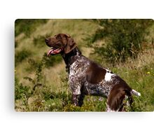German pointer Canvas Print