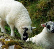 Roadside Lambs Sticker