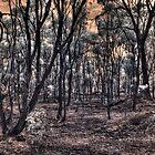 Burnt forrest by BigAndRed