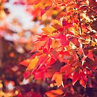 Autumn leaves of red and gold by Linda Lees
