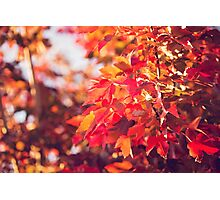 Autumn leaves of red and gold Photographic Print