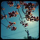 spring cherry tree ttv by Adam Graham