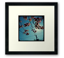 spring cherry tree ttv Framed Print