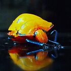 Reflection of a Beetle by Dave Storey