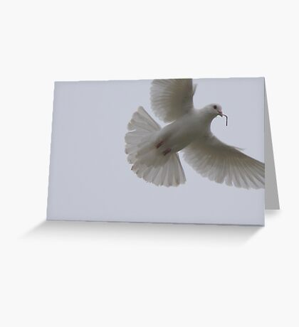 She didn't like THIS twig, either! Greeting Card