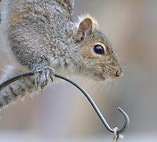 Squirrel Close-up by okcandids