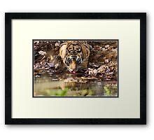 Tiger at Bandhavgarh closer still Framed Print
