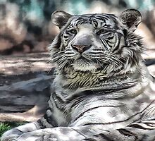 White tiger by Tammy  (Robison)Espino