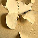 Banana Peel by Nicole Gesmondi