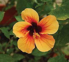 Floral Apeture by KensLensDesigns