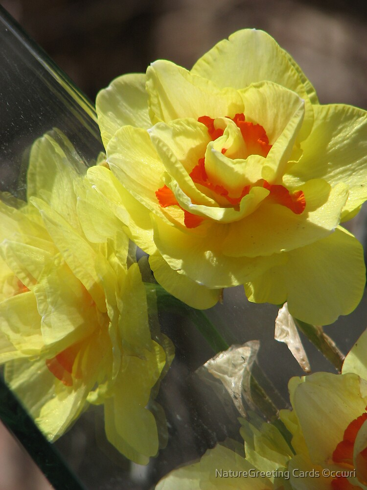 ~Spring Frenzy~ by NatureGreeting Cards ©ccwri