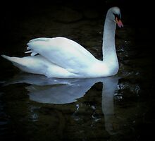 reflection of a swan by Dawn Barger