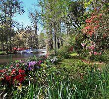 Magnolia Gardens Daytime Shot by photosan