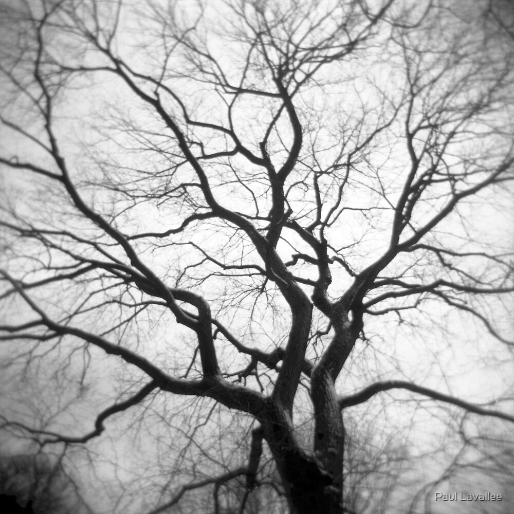 Twisted Intricacies by Paul Lavallee