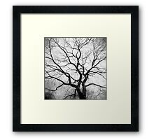 Twisted Intricacies Framed Print