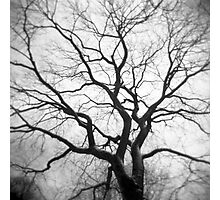 Twisted Intricacies Photographic Print