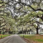 Boone Hall Plantation Way  by John  Kapusta