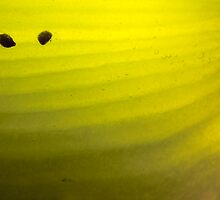 Abstract Kiwifruit - Romantic by Alex Ball