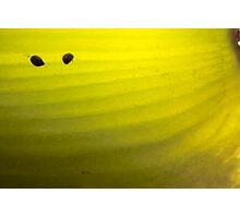 Abstract Kiwifruit - Romantic Photographic Print