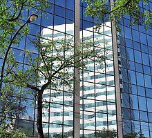 Reflections in Windows by Teresa Zieba