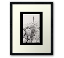 A Desert Scene North of Mount Lemmon, Arizona Framed Print