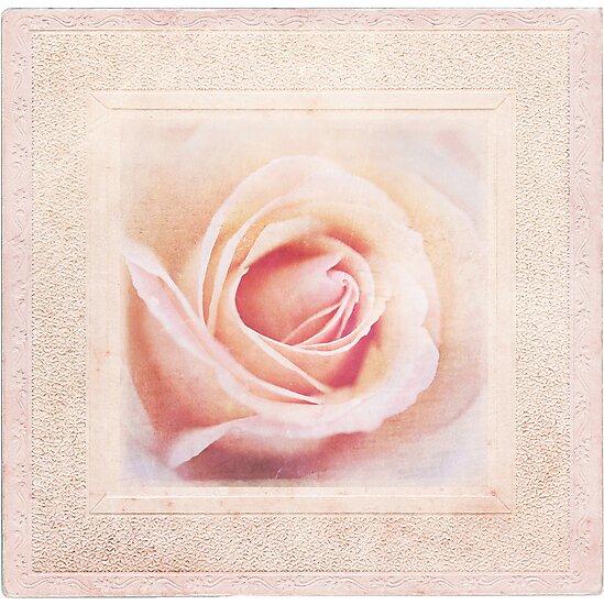 Shabby Rose by shanarae