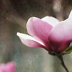 Tulip Tree by shanarae
