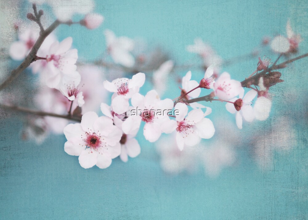 Blossoms on Blue by shanarae