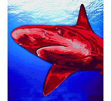 Blue and Red Shark art Photographic Print