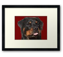 Cute Rottweiler With Tongue Out Framed Print