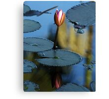 Pink Diva - waterlilly Canvas Print
