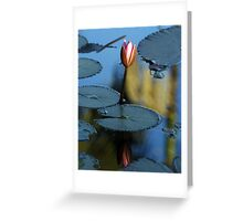Pink Diva - waterlilly Greeting Card