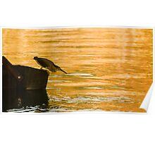 Heron Hunting Poster