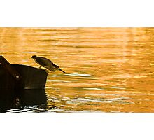 Heron Hunting Photographic Print
