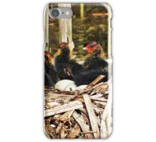 """ Coot Chicks"" iPhone Case/Skin"