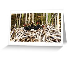 """"""" Coot Chicks"""" Greeting Card"""