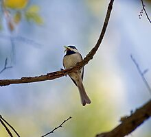 Carolina Chickadee with Caterpillars by Bonnie T.  Barry