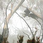Crying in the Mist by Kellea Croft