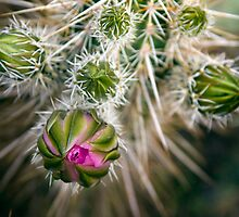 Desert Blooms by Sue  Cullumber