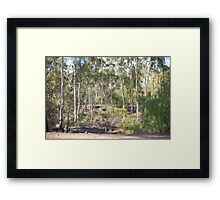 In the bush Framed Print