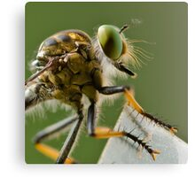 Robber Fly, waiting... Canvas Print