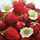 Strawberries by mistyrose