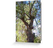 A beautiful Peppercorn tree Greeting Card
